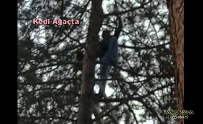 Yüksek Çam ağacına çıkan kediyi kahraman sağlıkçı kurtardı.