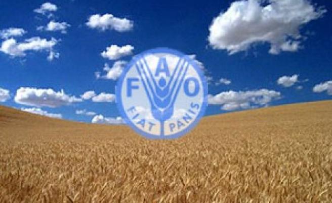 BM: Dünya Gıda Krizinden Zarar Görebilir