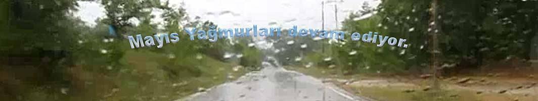 Pamukova Yağmurları Çiftçiyi korkutuyor.