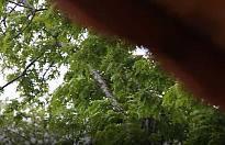 Pamukova Hafta sonuna kadar yağmurlu.