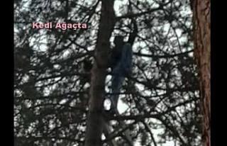 Yüksek Çam ağacına çıkan kediyi kahraman sağlıkçı...