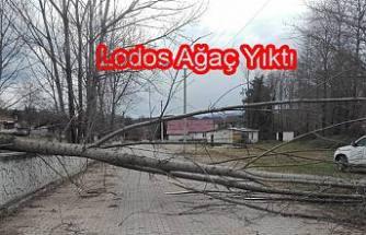 Lodos Sakarya Kocaeli, Bolu ve Düzce'yi de vurdu.
