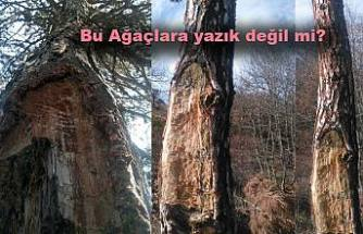 Şimdi Bozma Sırası Köylere ve Ormanlara geldi.