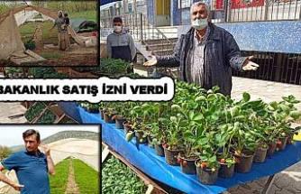 Çim Yetiştiricileri duysun…